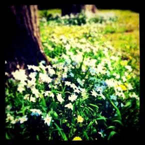 C'est comme ça au printemps